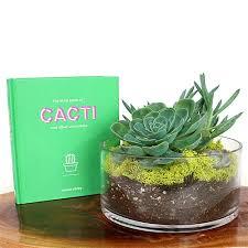 succulent dish terrarium gift set