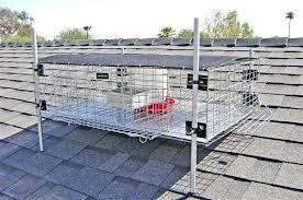 bird traps humane live capture bird