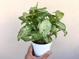 5 common houseplants toxic to children