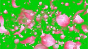 green screen flower animation hd fx
