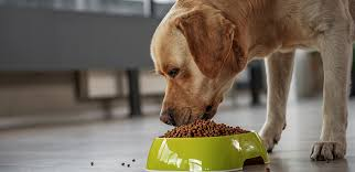 Dog Supplements: When Does Your Dog Need Supplements?