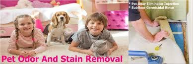 pet stain carpet cleaning kiwi kiwi