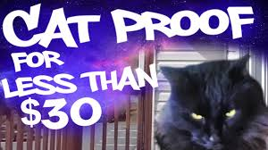 Cat Proofing A Balcony With No Roof For Less Than 30 Youtube