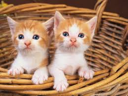 lovely cats images hd wallpaper