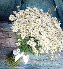 ورود رومانسية للاهداء Hoa Cuc Họa Mi Hoa đẹp Hoa Cuc