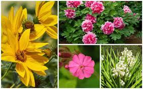 17 full sun perennials for your garden