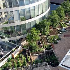 city rooftop vegetable garden