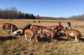 Farm Animal Welfare And Environment The Benefits Of Free Range Farming Winnipeg Humane Society