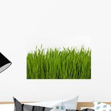 Wheat Grass Wall Decal Wallmonkeys Com