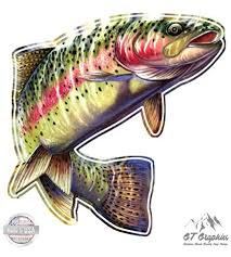 Amazon Com Gt Graphics Rainbow Trout Large Size Vinyl Sticker Decal For Truck Car Cornhole Board Sports Outdoors