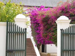 Free Images Flower Building Wall Balcony Tourism Gate Picket Fence Interior Design Product Shrub Winery South Africa Winelands Boschendal Cape Dutch Baluster Outdoor Structure Home Fencing 4000x3000 658136 Free Stock Photos