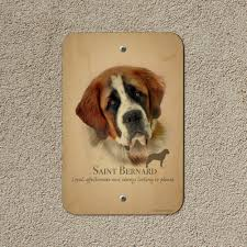 Saint Bernard Dog Breed Home Business ...