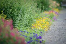 7 plants to use for borders p allen