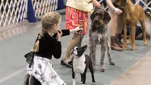 Novi dog show, Hip Hop Smackdown ...