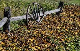 Wagon Wheel In Flower Garden Free Stock Photo Public Domain Pictures
