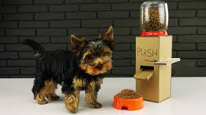 diy puppy dog food dispenser from