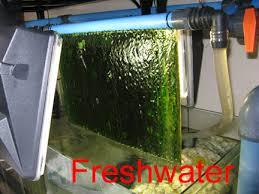 zeo compatibility with algae scrubbers