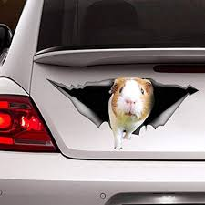 Amazon Com Guinea Pig Sticker Guinea Pig Car Decal Vinyl Sticker For Cars Windows Walls Fridge Toilet And More 11 Inch Kitchen Dining