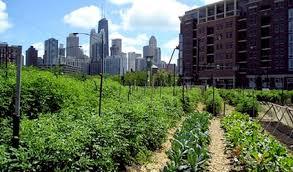 Agricoltura Urbana a Vancouver: Greenskins Lab, Sviluppo ...
