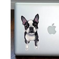 Boston Terrier Full Color Large Decal Dog Park Publishing