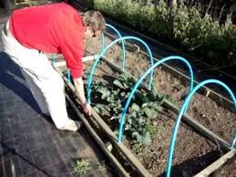 netted hooped crop plant protecting