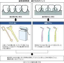 歯間の汚れ除去 フロス・歯間ブラシ使うコツ|ヘルスUP|NIKKEI STYLE