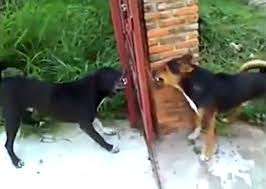 Ummm Do These Dogs Know The Gate Is Open These Guys Will Have You Lol I Love My Dog So Much