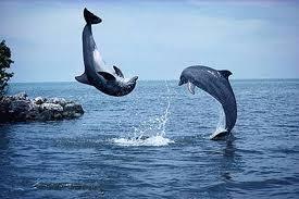 eListas.net - Mis eListas: mundo-delfines: Mensajes