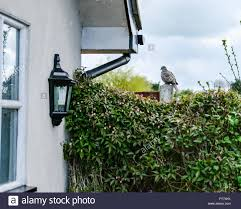 Solitary Turtle Dove Sitting On A Fence Post In Springtime Stock Photo Alamy
