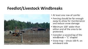 Windbreaks For Livestock Protection Ppt Download