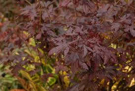 a list of trees for small gardens