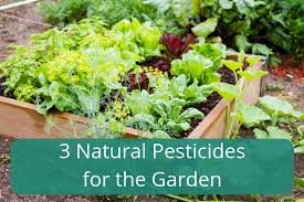 3 natural pesticides for the garden