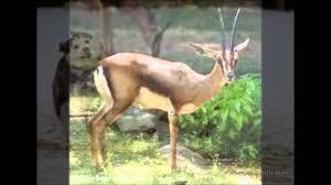 مقطع فيديو صور حيوانات Youtube