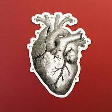Vinyl Stickers For Laptops Cars Etc Anatomical Heart Sticker Pergamo Paper Goods