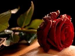 صور زهور رومانسية صور ورد رومانسي يعبر عن الحب والرقة