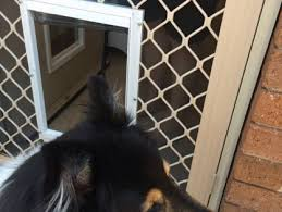 dog door types in australia