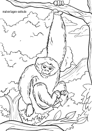 Kleurplaat Gibbon Apen Gratis Kleurplaten