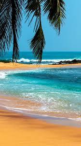 palm trees sea stones beach