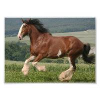clydesdale horse gifts on zazzle