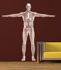 Ced540 Full Color Wall Decal Sticker Man Anatomy Human Biology Ebay