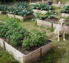 10 cedar raised garden beds ana white