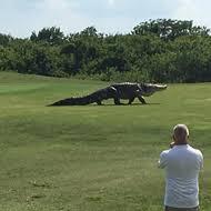 Florida Gators Don T Care About Your Fence Blogs