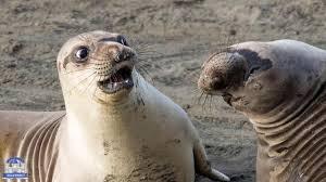 أكثر الصور المضحكة للحيوانات Youtube
