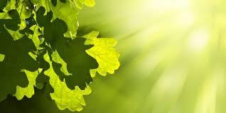 Fotosíntesis - Concepto, fases, características y ecuación