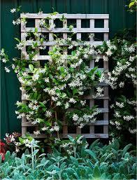 beautiful diy garden trellis ideas