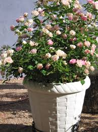 container gardening in the desert