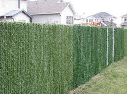 Privacy Hedge Slats For 4 High Chain Link Fence 10 Linear Foot Coverage For Sale Online Ebay