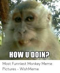 best memes about funny monkey meme
