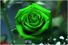 صور خلفيات زهور خضراء فلسنجي