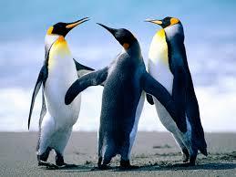 Dobrodosli u svijet pingvina!!! – Ira Max |Wordpress